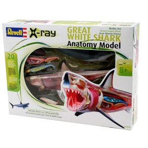 Tubarão branco em miniatura, anatomia 3D desmontável