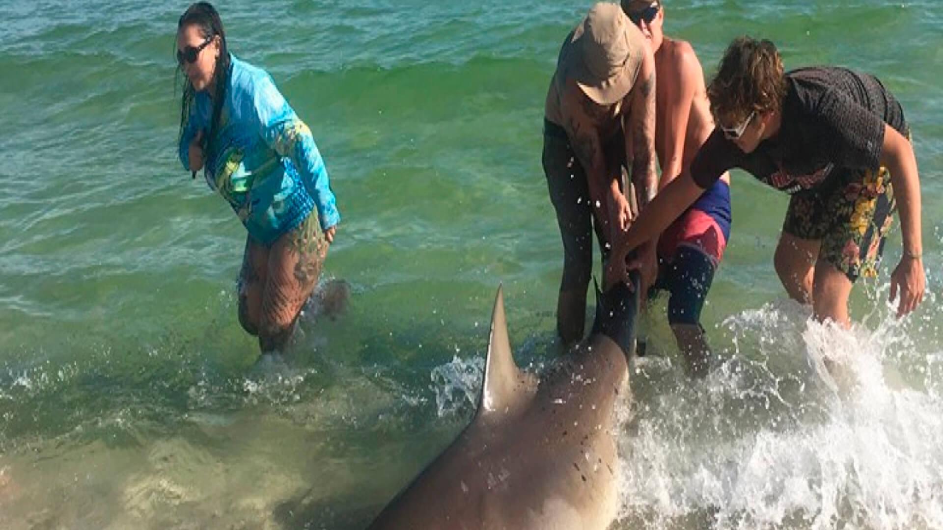 Momento é que turistas tiram fotos do tubarão Cabeça-Chata nos EUA