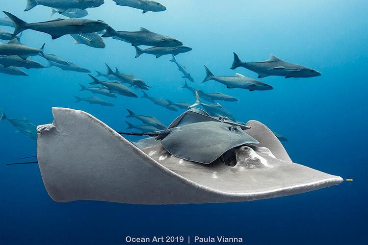 Foto do concurso Ocean Art Underwater Photo, categoria Comportamento da Vida Marinha