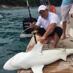 Tubarões mortos em área de preservação ambiental em Angra dos Reis