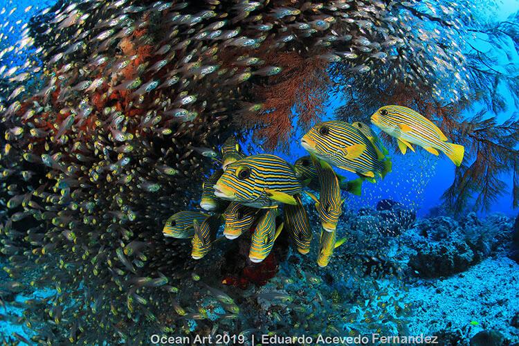 Foto do concurso Ocean Art Underwater Photo, categoria Recife de Corais