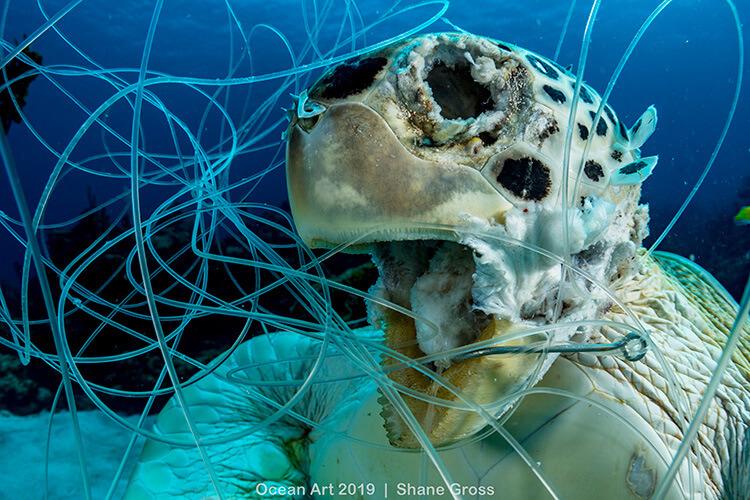Foto do concurso Ocean Art Underwater Photo, categoria Conservação