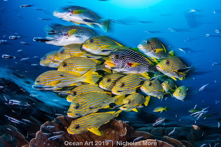 Foto do concurso Ocean Art Underwater Photo, categoria Grande Ângular