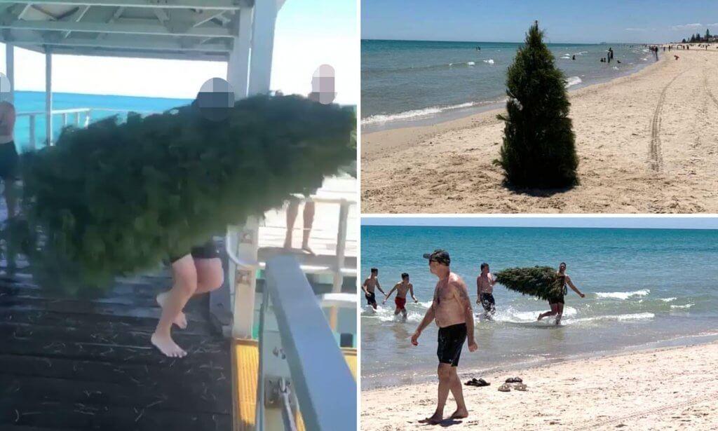 Árvore de Natal confundida com tubarão na Austrália