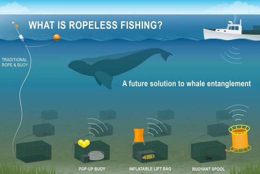 """Ilustração de como o equipamento de pesca sem corda também conhecido como """"ropeless"""" ou """"pop up"""" funciona. Crédito da imagem: NOAA Fisheries"""