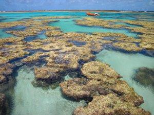 Foto PELD ILOC https://peldiloc.sites.ufsc.br/pt/expedition/atol-das-rocas-2/