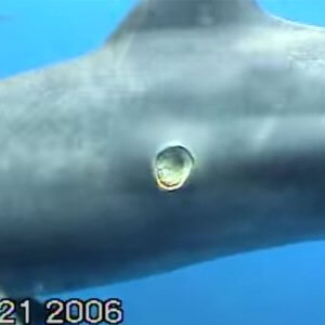 Cookie Shark - From abc7ny.com